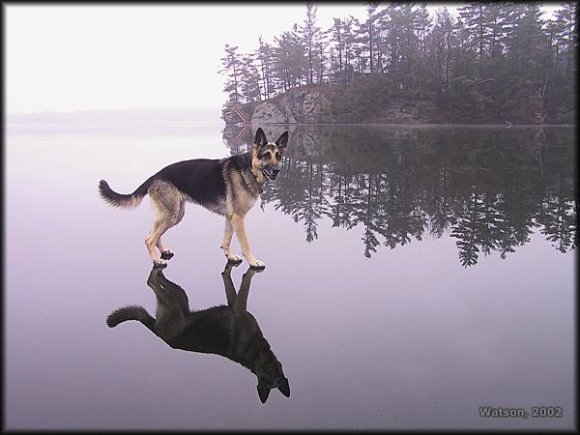 Walk on Water Optical Illusion
